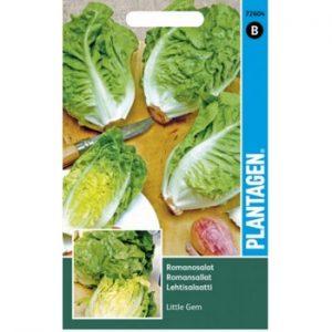 листовой салат семена